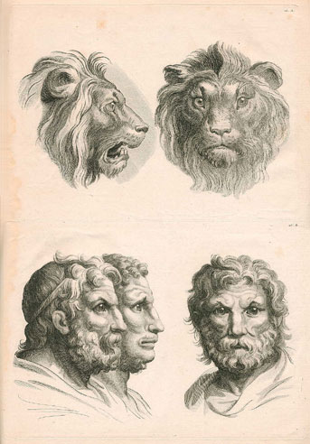 What will evolved humans look like 11